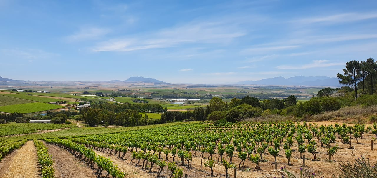 South Africa expects exceptional 2020 vintage despite COVID-19 lockdown